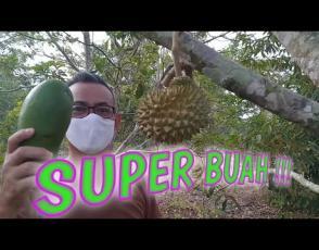 Embedded thumbnail for Ngerandak Kelekak Dengan Kepala KPHP Rambat Menduyung